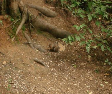 Big Cat Sightings In Hertfordshire